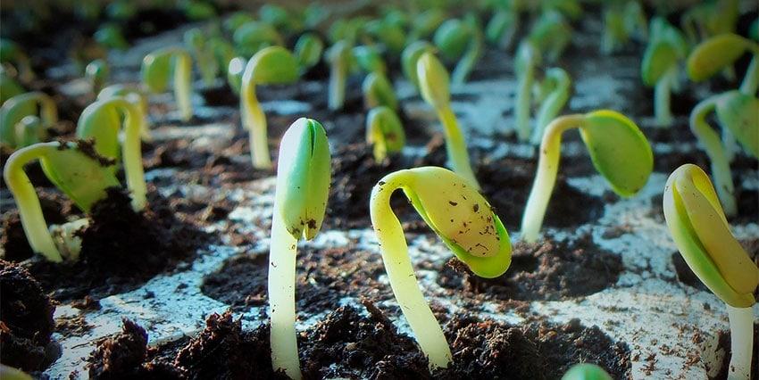Sulfato de Magnesio en la Agricultura
