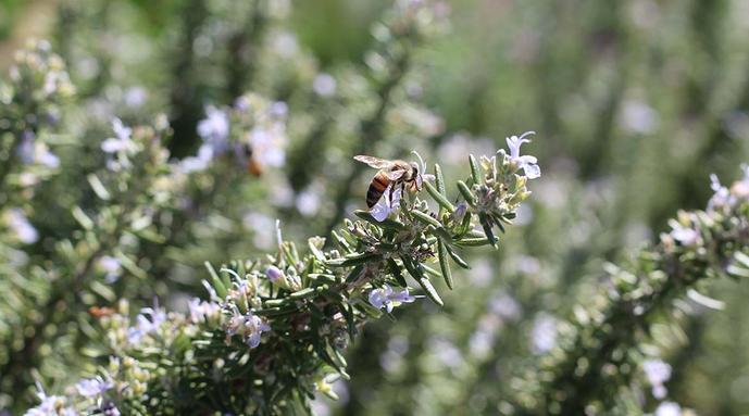 amigos en las colmenas: cómo plantar un jardín apto para las abejas esta primavera