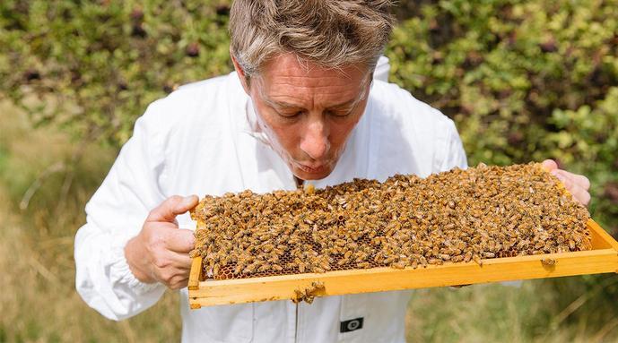 el rumor comienza aquí: un nuevo hogar para todo lo relacionado con las abejas y la miel